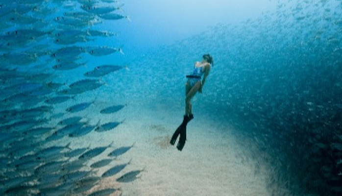 Ocean Film Festival World Tour - Cert 12A
